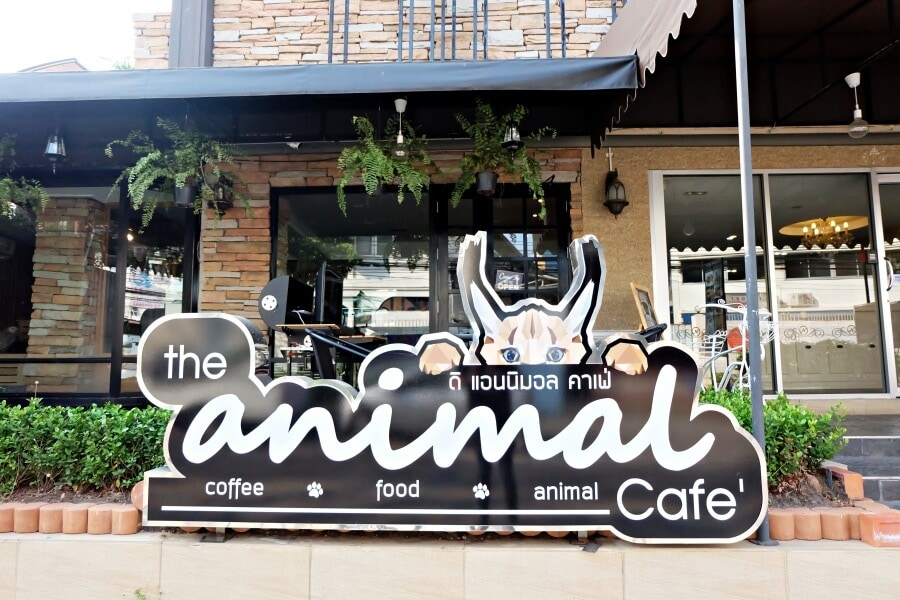 review-the-animal-cafe84