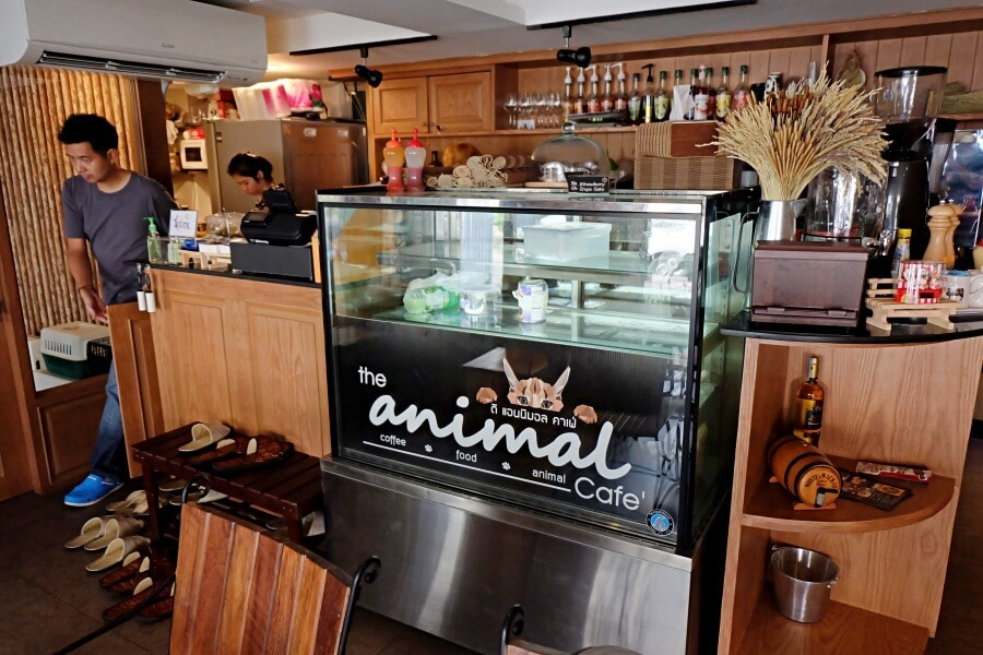 review-the-animal-cafe95